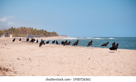 scavengers waiting for the corpse of a dog in front of the sea.