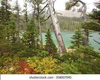 Scene of beautiful pristine forest from Fairy Lake, in Montana's Bridger Range