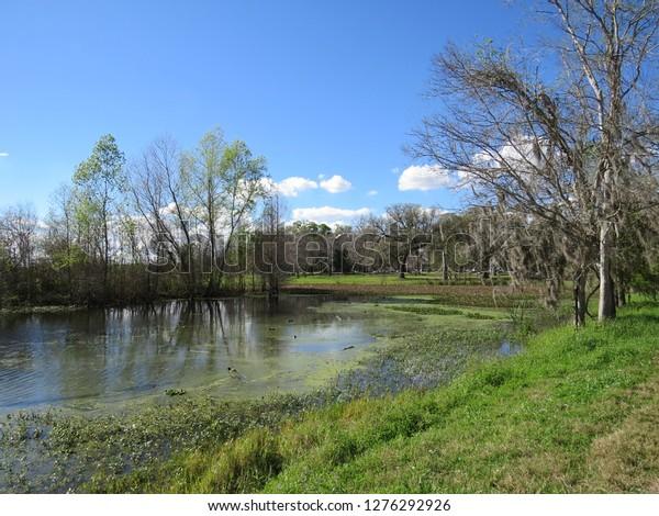 scene-brazos-bend-state-park-600w-127629