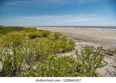 Scene of Coastal Louisiana at Holly Beach in Cameron Parish