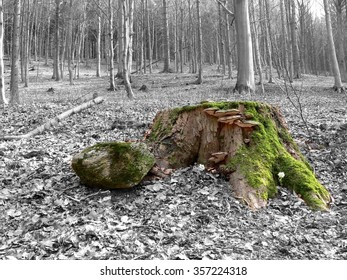 Scene from forest - color stump with green moss in grey forest