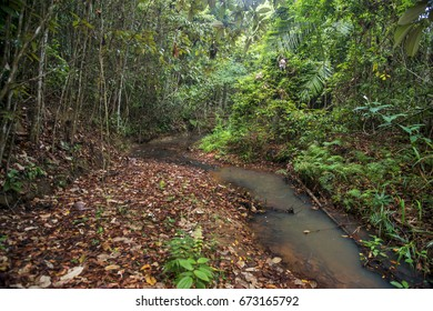 Scene of a forest on the banks of a stream. Plants and trees of various thicknesses. Dried leaves, twigs and fallen logs.