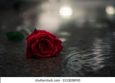Scene of fresh red falling rose on the concrete floor with rain drops. broken heart concept. soft light. copy space.