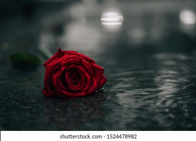 Scene of fresh red falling rose on the concrete floor with rain drops. broken heart concept. soft light. vintage, gunge, dark, color tone. selective focus. copy space.