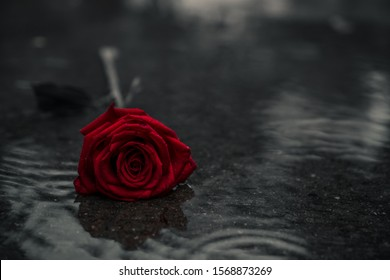 Scene of fresh red falling rose on the concrete floor with rain drops. broken heart concept. soft light. vintage, gunge, old, dark style. selective focus. copy space.
