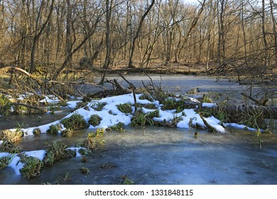 Scene with frozen bog and last snow in forest