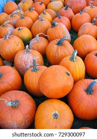 A scene full of bright orange pumpkins