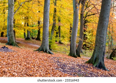 A scene in golden autumn forest