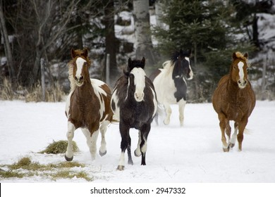 Scene from a horse round up in rural Montana