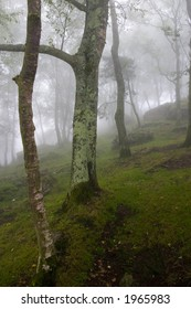 scene of the interior of a mountain forest in a cloudy day
