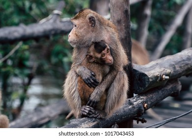 Scene of little monkey gets warmth in her mother embrace.