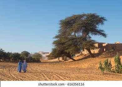 Scene with Locust Tree and Traditionally Clothed Men in Mauritania