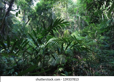 A scene looking straight into a dense tropical rain forest