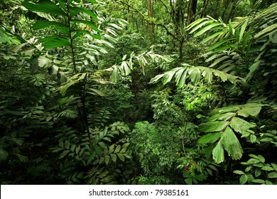 A scene looking straight into a dense tropical rain forest, taken in Costa Rica