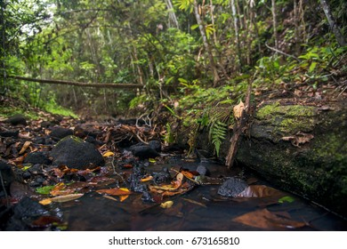 Scene of a natural landscape. Dried leaves and fallen logs around the puddle of water. A forest around.