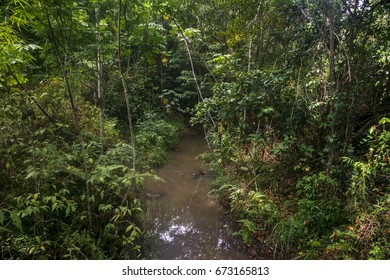 Scene of a natural landscape. A stream passes in the middle of the forest.
