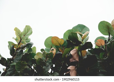 A scene of ocean side plantlife.