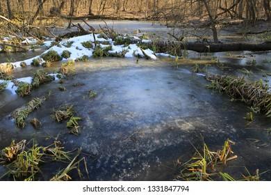scene on bog under ice in spring forest