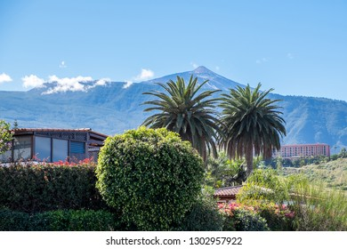 Scene with palm trees and residential area with the volcano Teide in the background in Puerto de la Cruz, Tenerife, Canary Islands