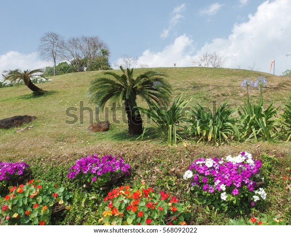 a scene of red/violet flowers with Palm tree and nice blue sky