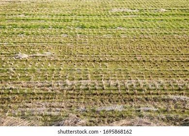 A scene in the rice field after harvesting. In the Japanese countryside.