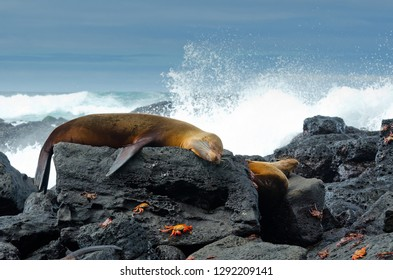 Scene of the rocks of the Galapagos