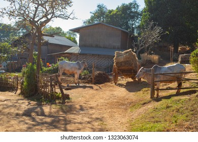 Scene from rural life in the village in the fields between Kalaw and Inle lake, Myanmar