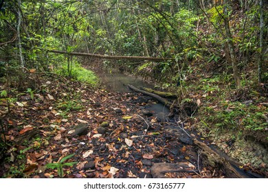Scene of a stream with a forest on the banks. Dried leaves and trunks fallen into the stream.