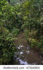 Scene of a stream with a leafy forest around. Trees and plants of various sizes.