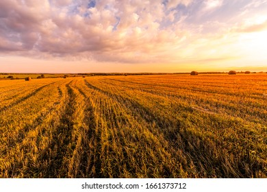 Scene of sunset on the field with haystacks in Autumn season. Rural landscape with cloudy sky background. Golden harvest of wheat.