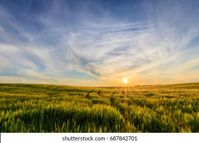 Scene of sunset on the field with young green rye in the summer with a cloudy sky. Landscape.