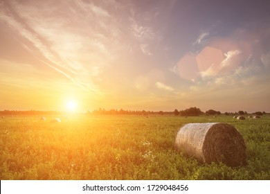 Scene of sunset or sunrise on the field with haystacks in Autumn season. Rural landscape with cloudy sky background. Golden harvest of wheat.
