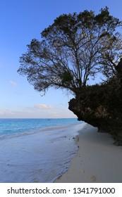 Scene with tree on ocean shore