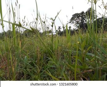 Scenerio natural beauty green grass - Shutterstock ID 1321605800