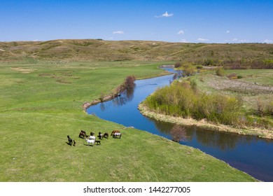 Scenery above view of horses on grazing near river in late spring season