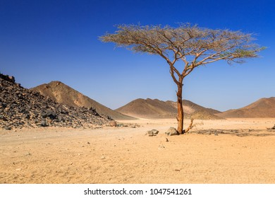 Scenery of the african desert in Egypt
