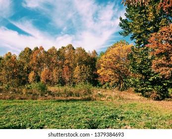 the scenery of atumn season