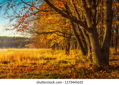 Scenery autumn background. Amazing view on wild autumn nature. Yellow trees on golden meadow. Beautiful landscape of colorful october on sunny day. Fall