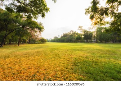 Scenery autumn garden and meadow in morning with  tree, Wonderful sunbeam at the natural park