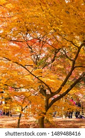 The scenery of autumn leaves in Kyoto,Japan.