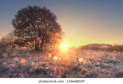 Scenery of autumn nature in morning at sunrise. Sunbeams on autumn meadow with tree. Hoarfrost on yellow grass. Amazing dawn on wild nature with shining bokeh. Beautiful natural scene of countryside.