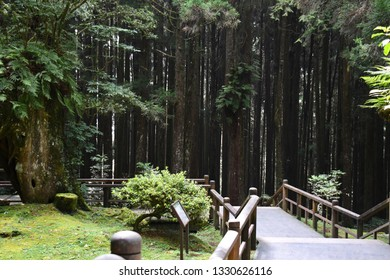 Scenery background of the walking way with green natural forest at Alishan National Scenic, Taiwan