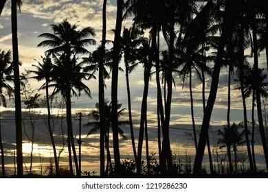 scenery cocunut tree