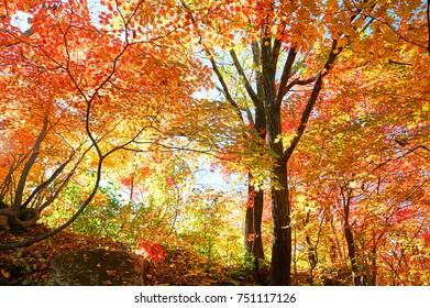 the scenery of colorful leaves in autumn