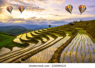 The scenery cornfield rice terrace and step ladder rice filed with hot air balloon flying. Sunset beautiful sky in Ban Pa Bong Piang, Chiang Mai, Thailand.