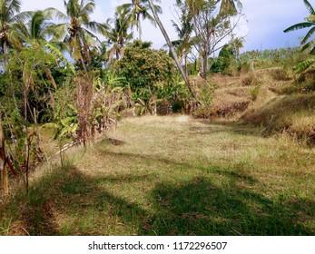 Scenery of  Dry Plant Fields At Banjar Kuwum, Ringdikit Village, North Bali, Indonesia