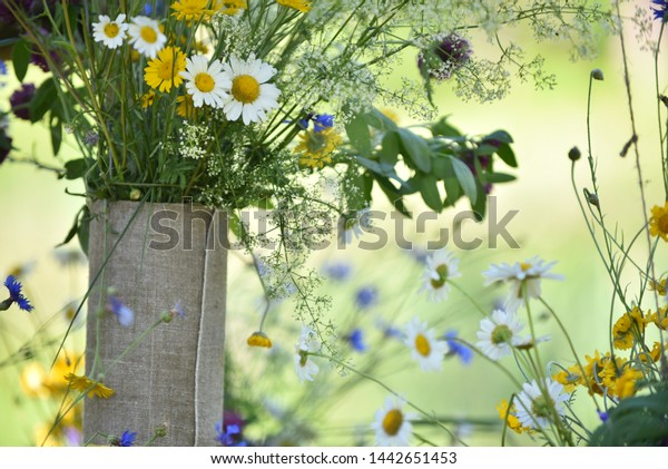 scenery-fresh-wildflowers-midsummer-flow