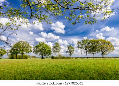 Scenery with grass and trees, blue sky and white clouds.