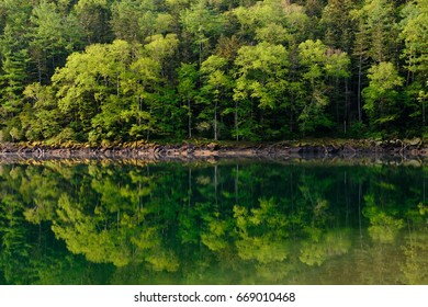 Scenery of the green lake water and forest trees with new green leaves