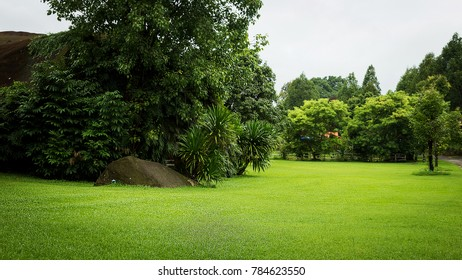 Scenery green park and beautifil grass field